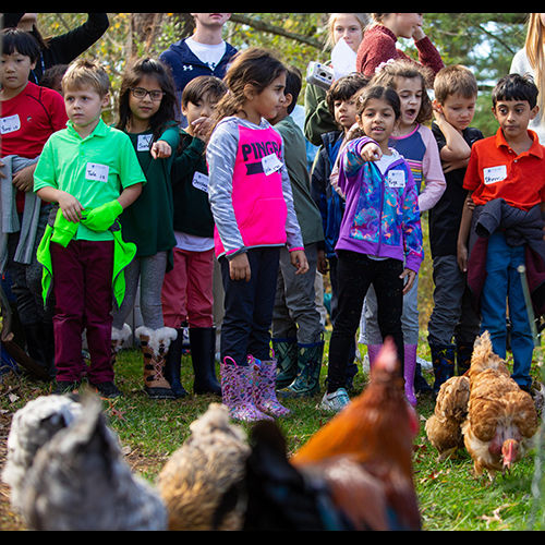 Lower School Hatches Cross-Campus Chicken Adventure
